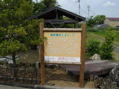 Harunoazisai3_r