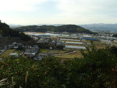 Mikanyamafuukei_r