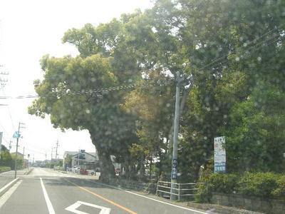 Yosikawa_r
