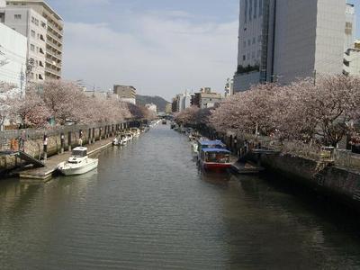 Horikawasakura2_r