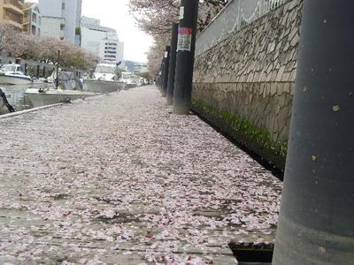 Sakurafubuki1_r