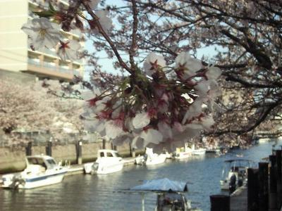 Sakura01_r