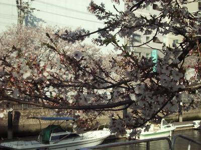 Sakura03_r