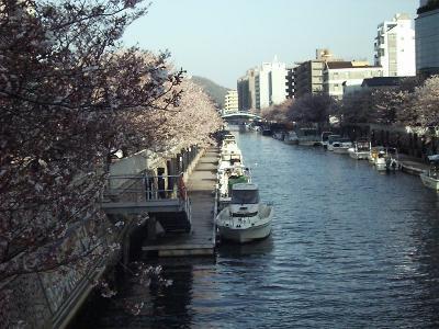 Sakura04_r