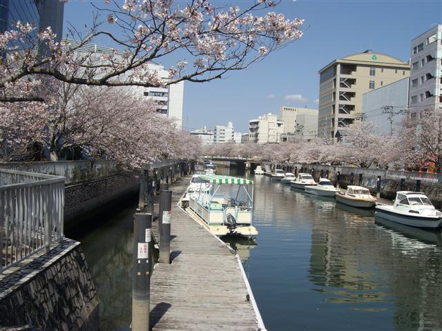 Horikawasakura03_r