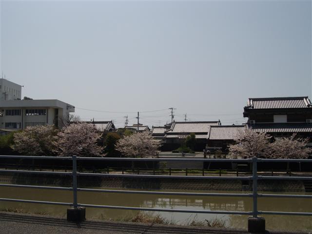 Akaokasakura01_r