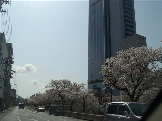 Horikawasakura02_r
