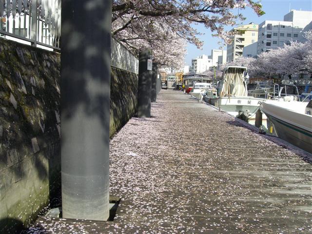 Hosakurafubuki16_r