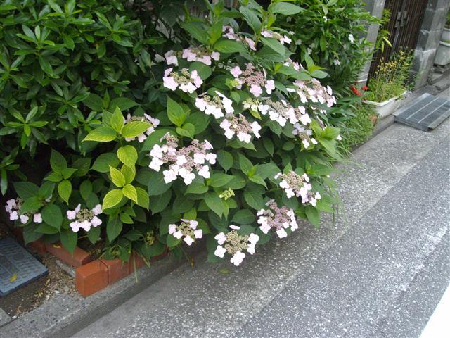 Dokudami02_r