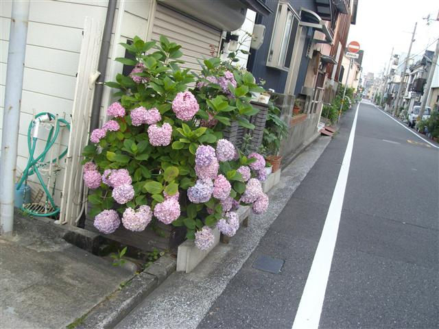 Azisai03_r