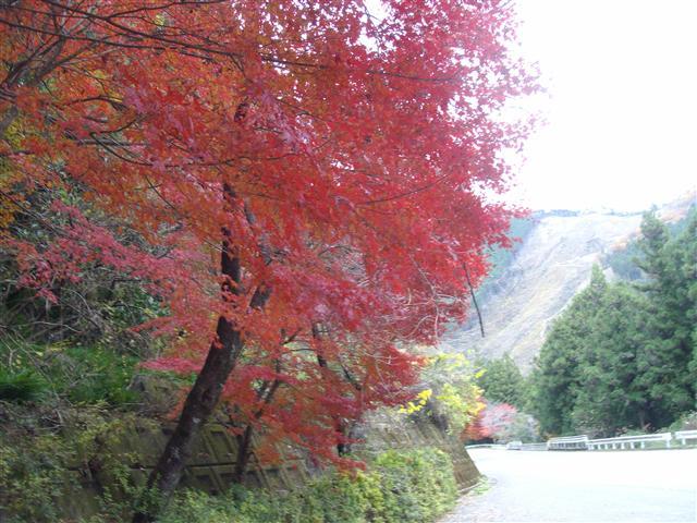 Kouyouamougohoku003_r