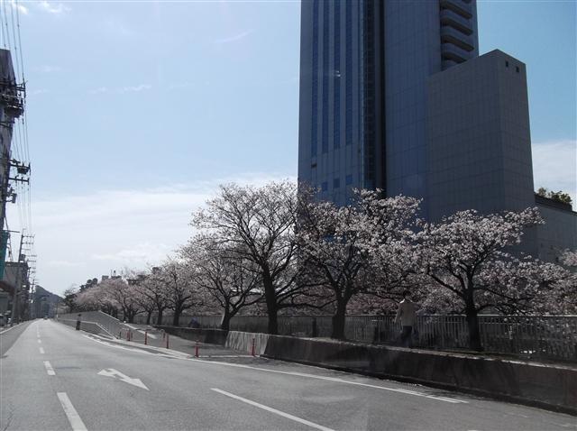 Horikawasakura40627_r