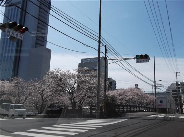 Horikawasakura40656_r