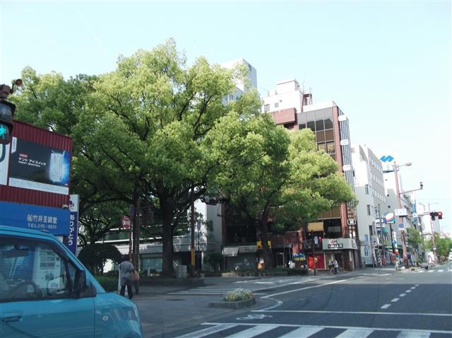 Sinryokukentyoumae57_r