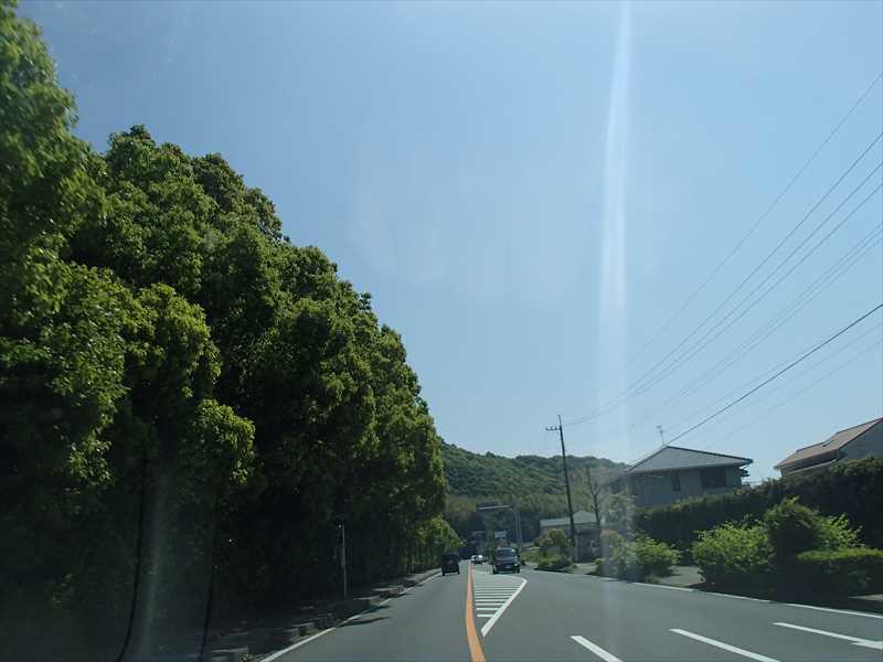 Sinryokutouchi_r